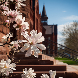 Spring flowers bloom on UVM's campus, with Old Mill in distance