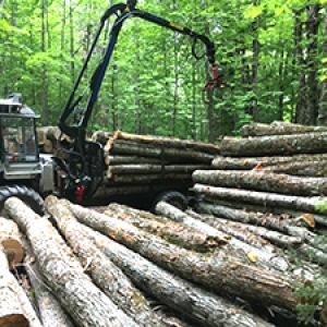 Logger piling up hardwood logs in forest