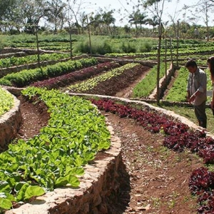 land management and ecosystem in Cuba