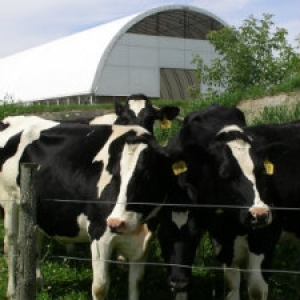 Holsteins and a Bedded Pack Barn on a Vermont Dairy