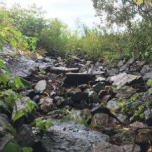 gully on the farm