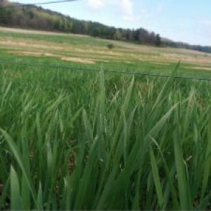 Pasture Greening Up in May