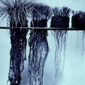 Roots Show the Difference in How Grazing Affects Plant & Soil Health