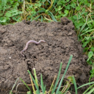 Well-Managed Pasture Results in Healthy Soil Rich in Organic Matter