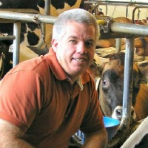 Norm in the CREAM barn kneeling next to a cow