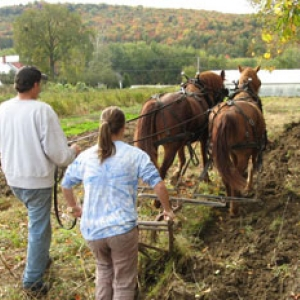 GreenHouse students plowing with horses