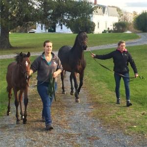 students - campus activities - morgan horse