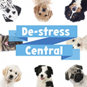 Therapy Dogs for Destress Central