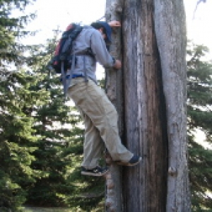 forestry student climbing a tree