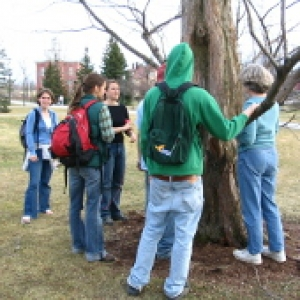 students studying a tree