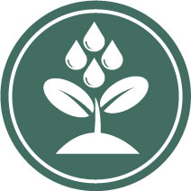 an icon image of a plant being watered