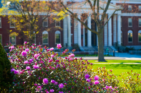Spring blossoms on campus with Waterman building in the background