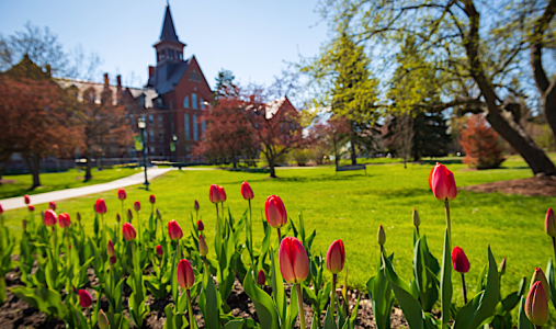 Tulips on on the UVM green with Old Mill in the background