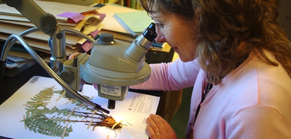 woman looking at mounted dried plant through microscope