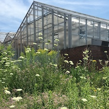 Campus greenhouse in daylight.