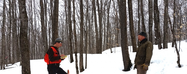 Two foresters take notes in hardwood stand in snow