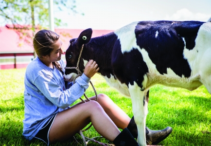 A female student pets a calf