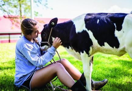 A female student pets a calf
