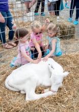 3 grils petting a calf