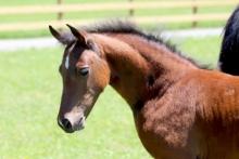 2018 Fall Foal