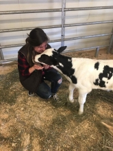 Student giving calf lots of nose kisses