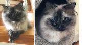 Macska the Cat