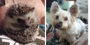 Rocko the Hedgehog and Lily the Dog
