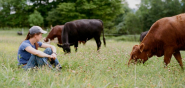 image description:woman in baseball cap and denim clothes sitting in the grass with two brown grazing cows nearby