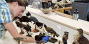 Sonia examining mounted birds