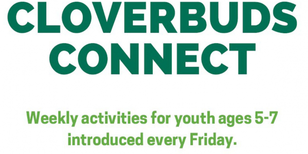 cloverbuds connect logo