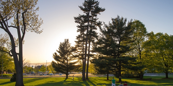 Pine trees at sunset on the UVM Green