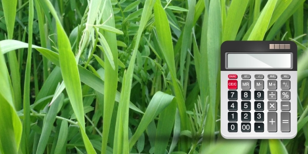 Calculator superimposed over leaves of vetch