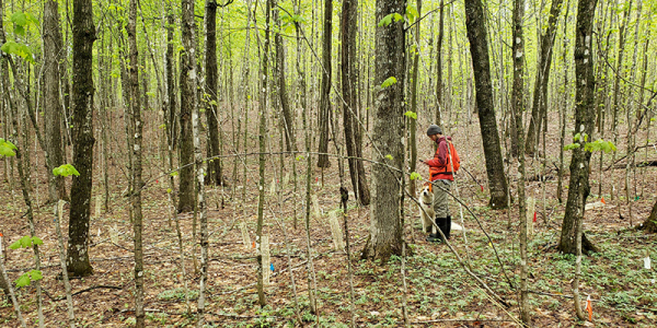 Student and dog conducting research in hardwood forest
