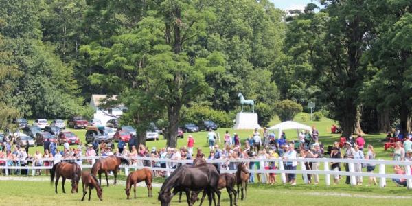 crowd behind fence watching eight morgan horses in paddock