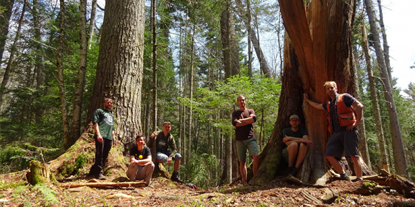 Researchers stand in northeastern old-growth forest