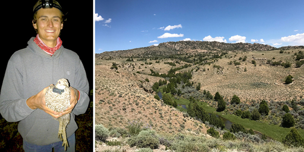 Kevin holds a radio-collared sage grouse and sagebrush landscape