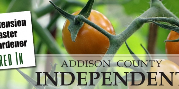 Logos for Master Gardener and Addison County Independent