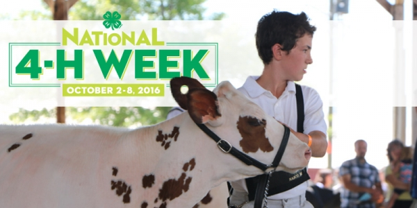Boy with show cow
