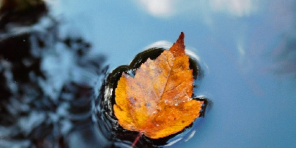 Leaf floating in water