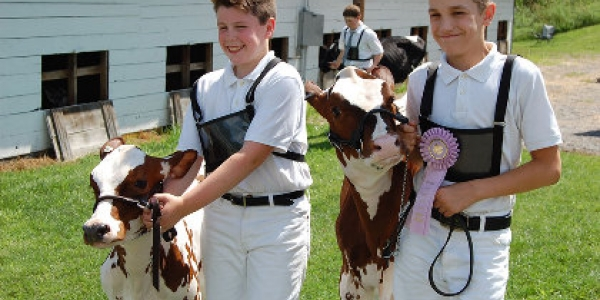 Two boys with their cows