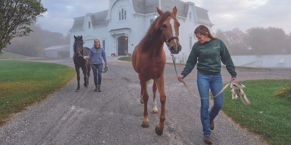 UVM Morgan horses with farm manager and equine specialist