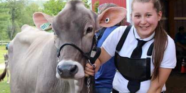 Ellie Bissell with her Brown Swiss summer yearling, Splendiferous