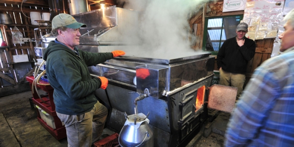 maple sugar production