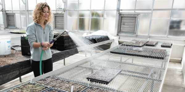 Student Zoe Garrett watering seedlings in the UVM greenhouse.