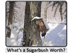 Sugarbush valuation thumb